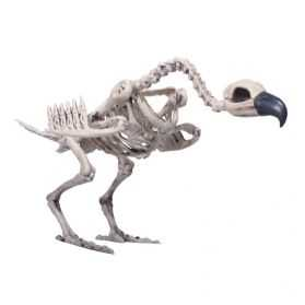 Faux Squelette de vautour