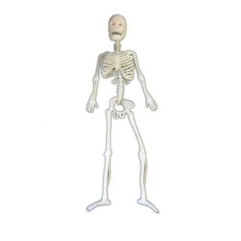 Squelette souple