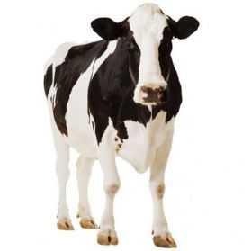 Décoration géante en forme de Vache