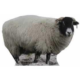 Figurine Mouton