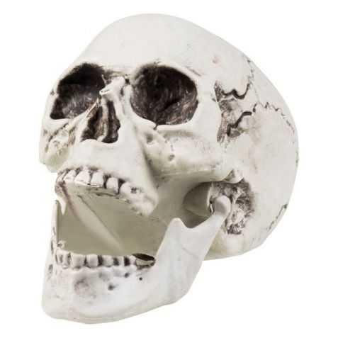 Faux Crane de squelette