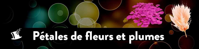 Pétales de fleurs et Plumes